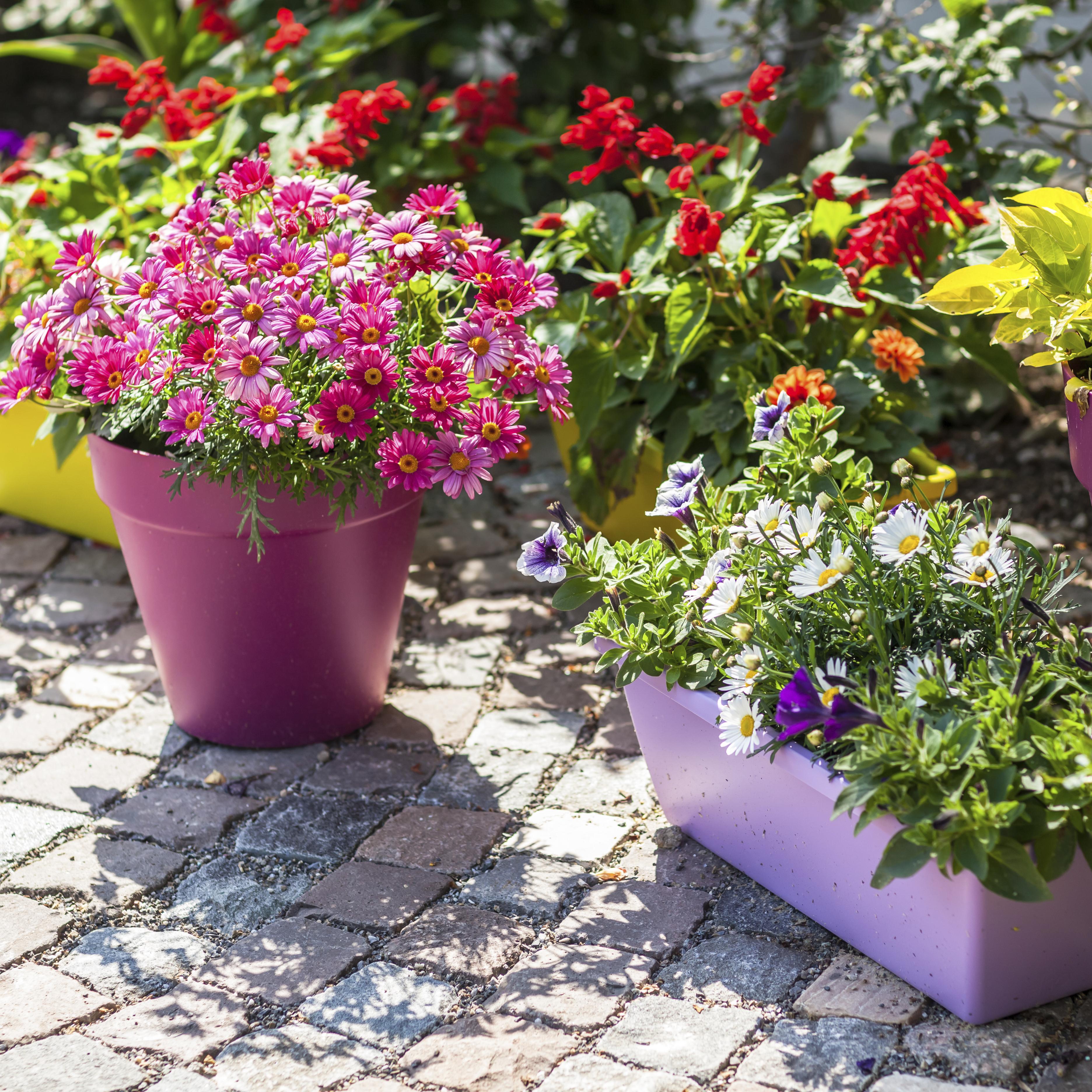 Blumentöpfe verschönern – So werden langweilige Töpfe zum Blickfang