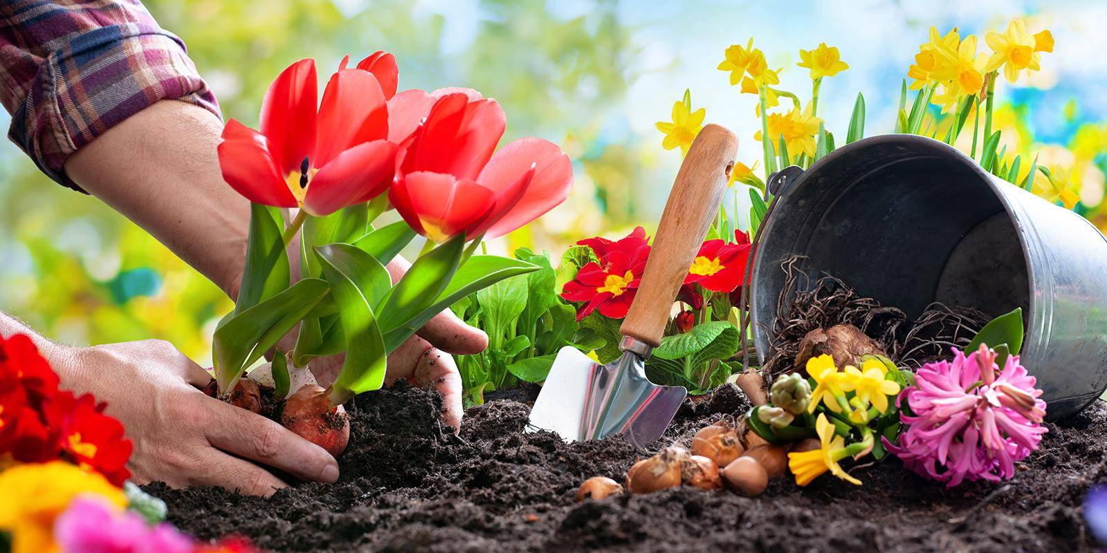 So wird dein Blumenbeet zum Blickfang
