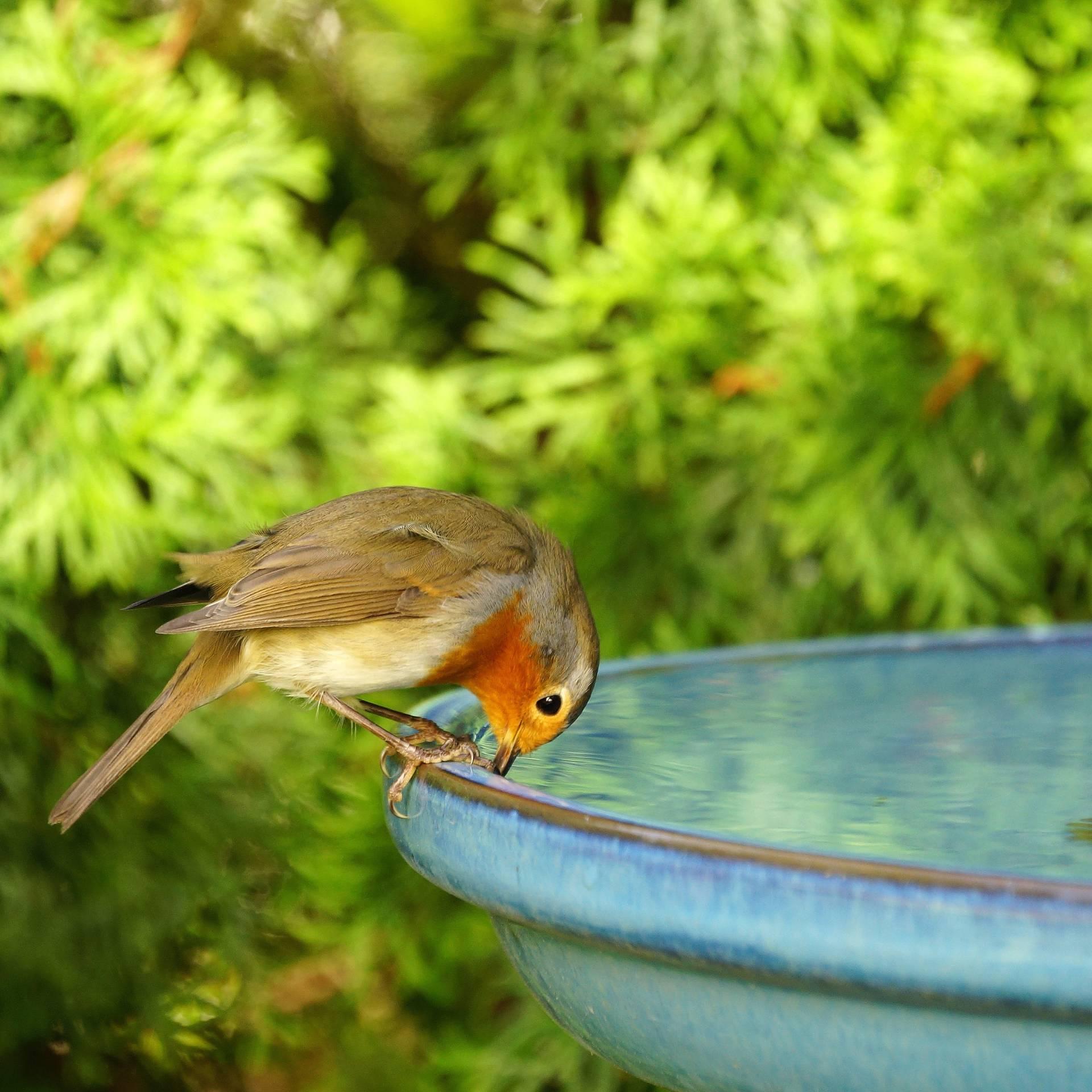 Muttertagsgeschenk für den Garten: So baust du eine Vogeltränke aus Beton