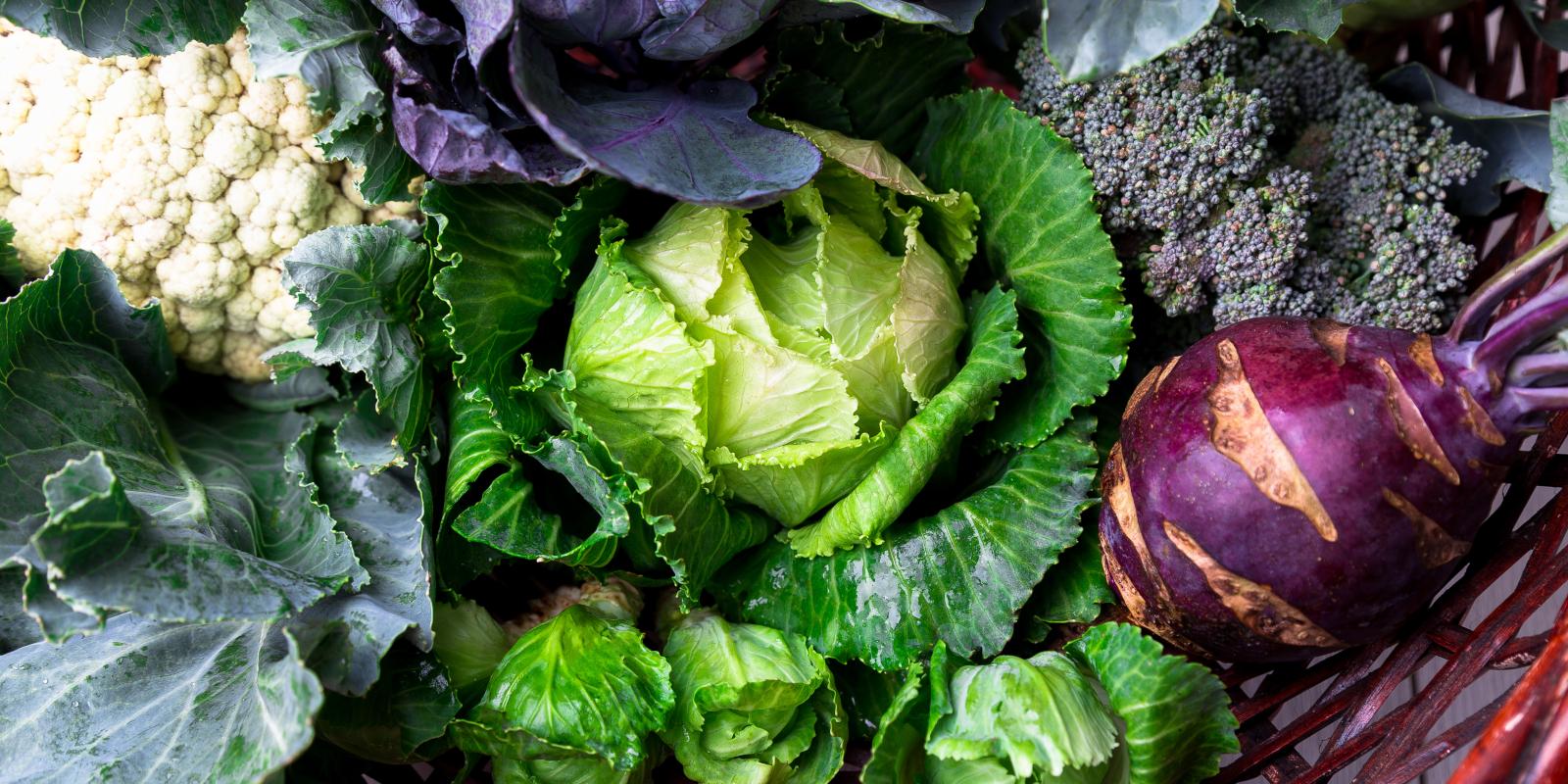 Saisonale Gerichte für den Februar: 3 leckere Kohl-Rezepte aus deinem Garten
