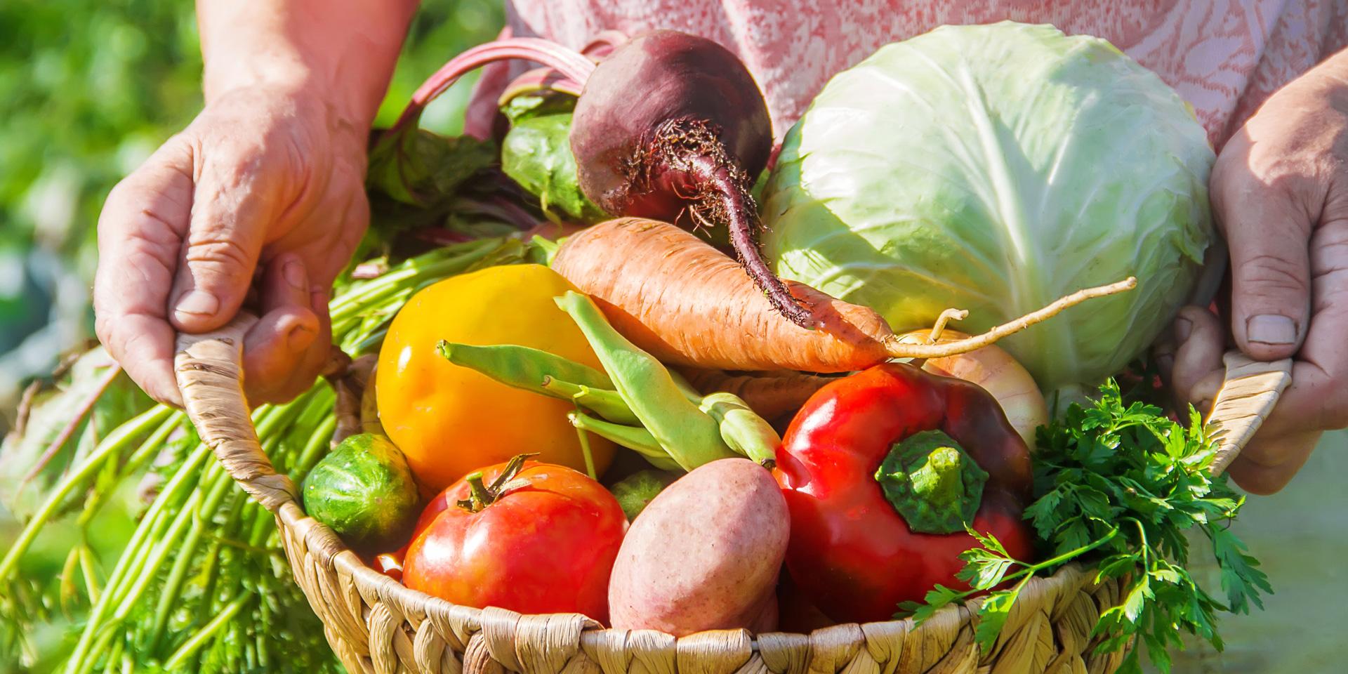 Gemüseanbau für Anfänger: 6 Tipps für eine reiche Ernt