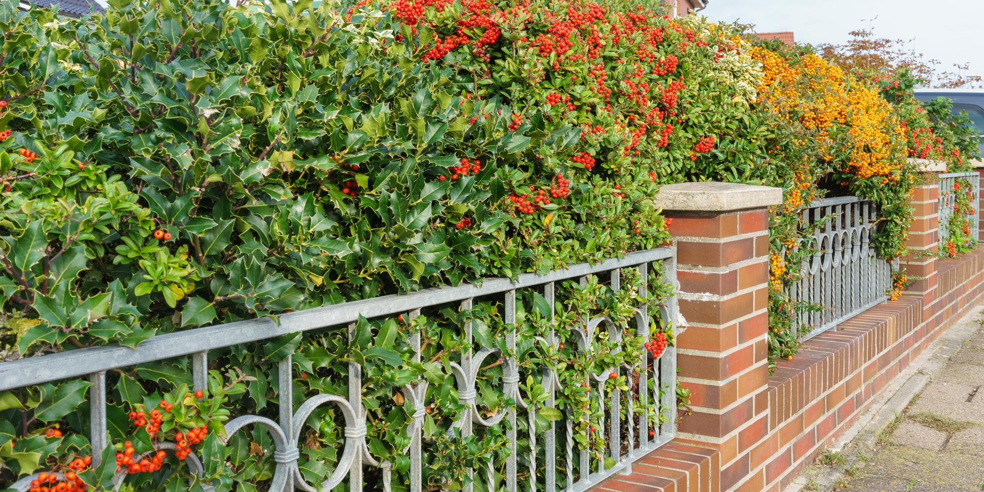 4 Ideen für den perfekten Sichtschutz im Garten