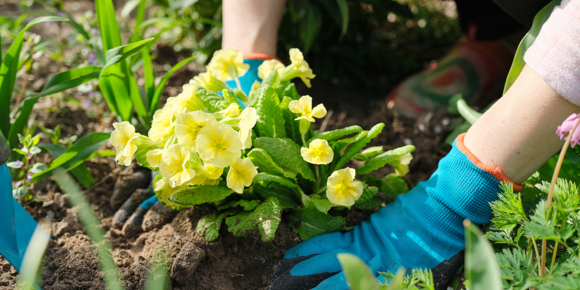 Der März ist da: So machst du deinen Garten frühlingsfit