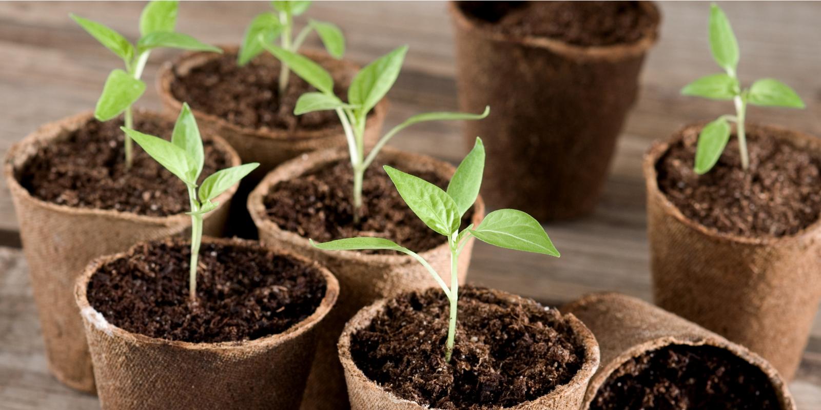 Vom Samen zum Steckling: So kannst du dein Gemüse im Frühling selbst vorziehen