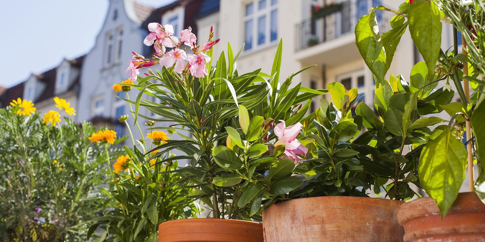 Urban Gardening – Mit wenig Platz zum Gartentraum